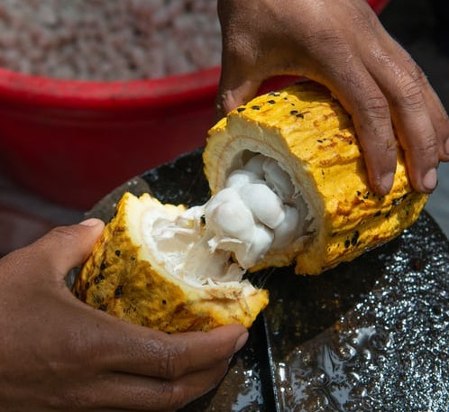 Chocolate Making Process: How Cocoa's True Value is Revealed